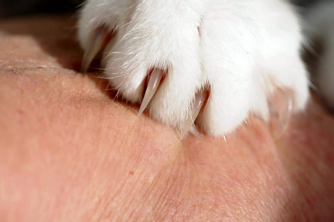 cat nails close up