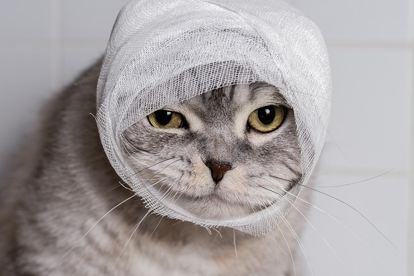 cat with bandage