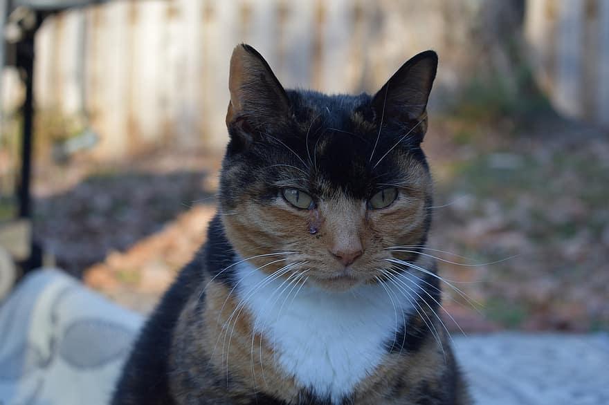 grumpy calico cat