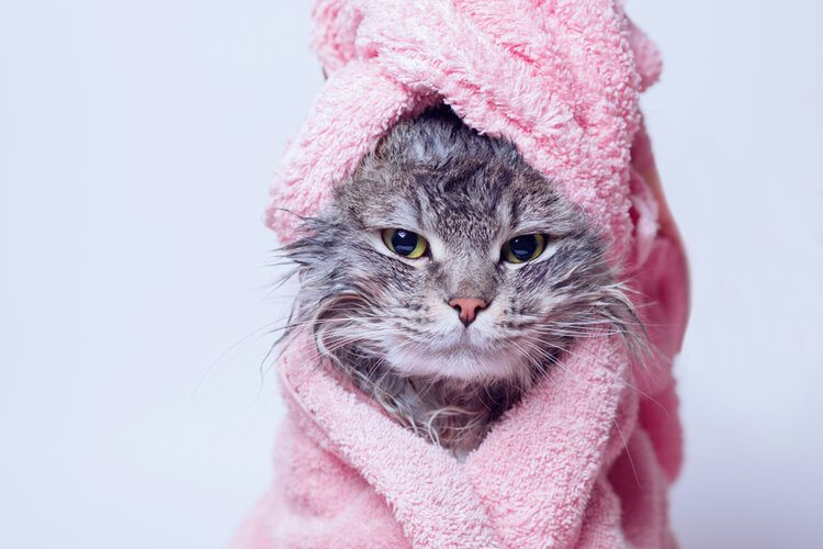 cute cat wrapped in towel