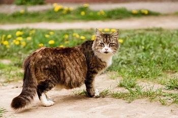 Best Cat food for pregnant cat
