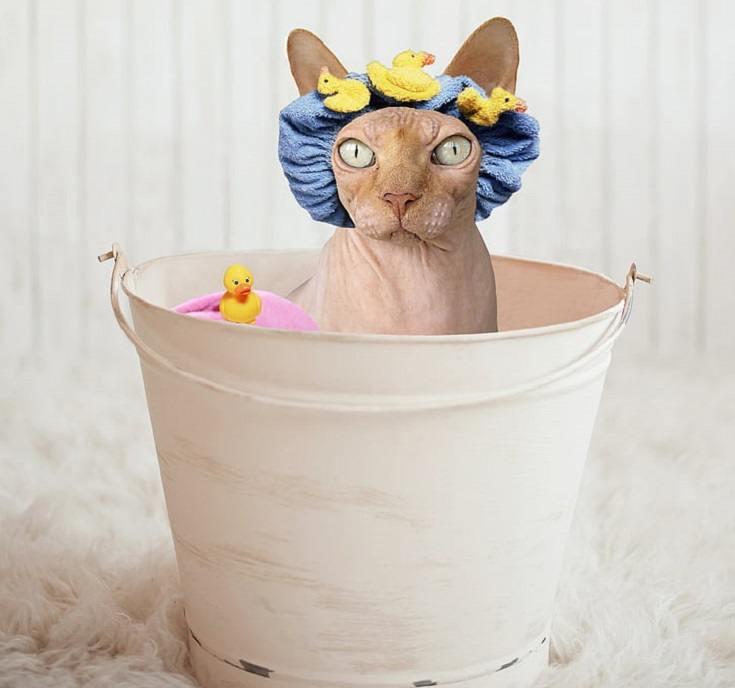 Cat Taking a Bath