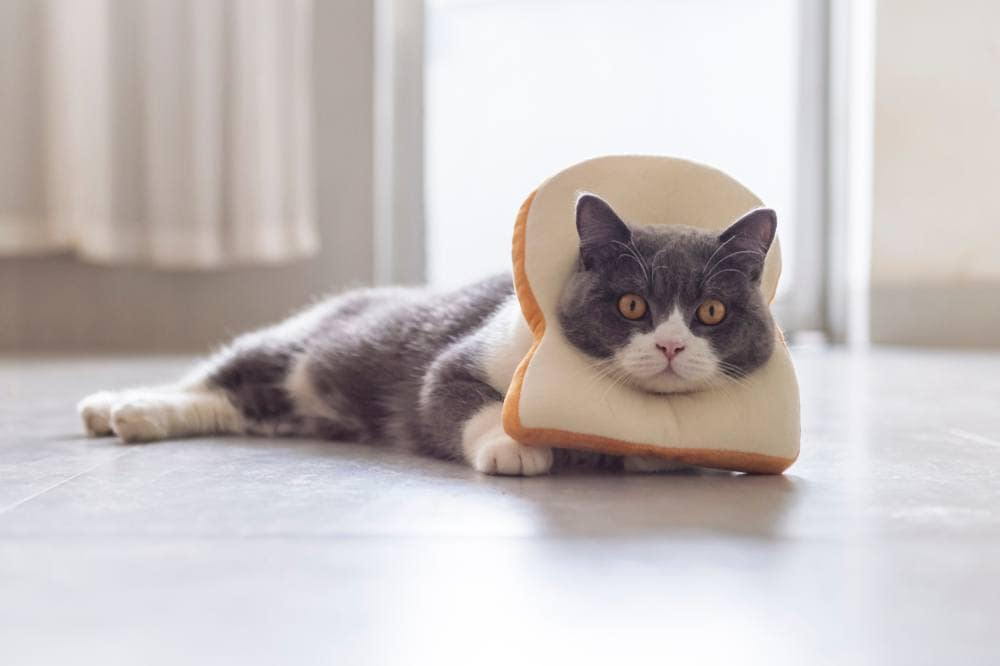 Cat with bread mane