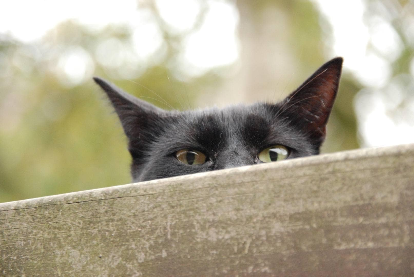 cat peeping
