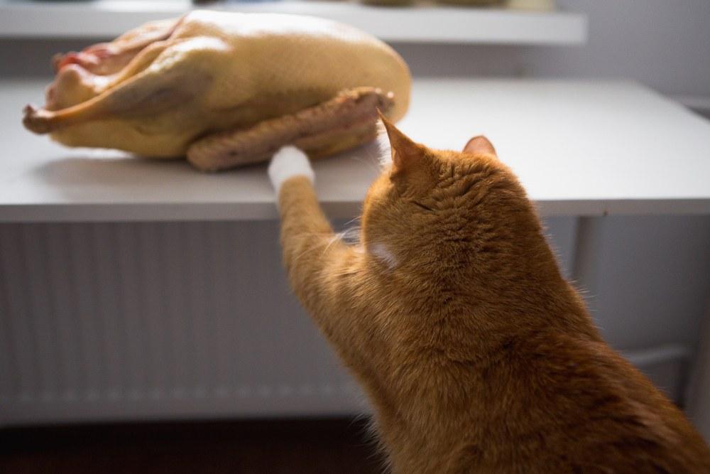 Cat reaching for turkey