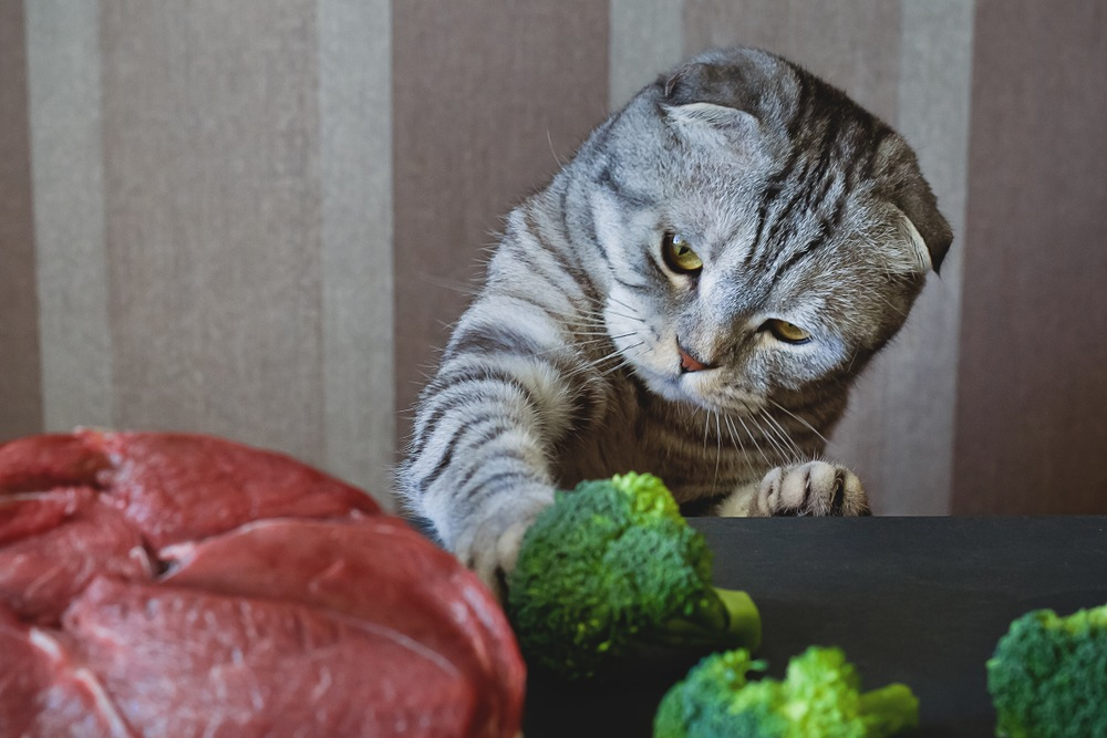 cat with broccoli