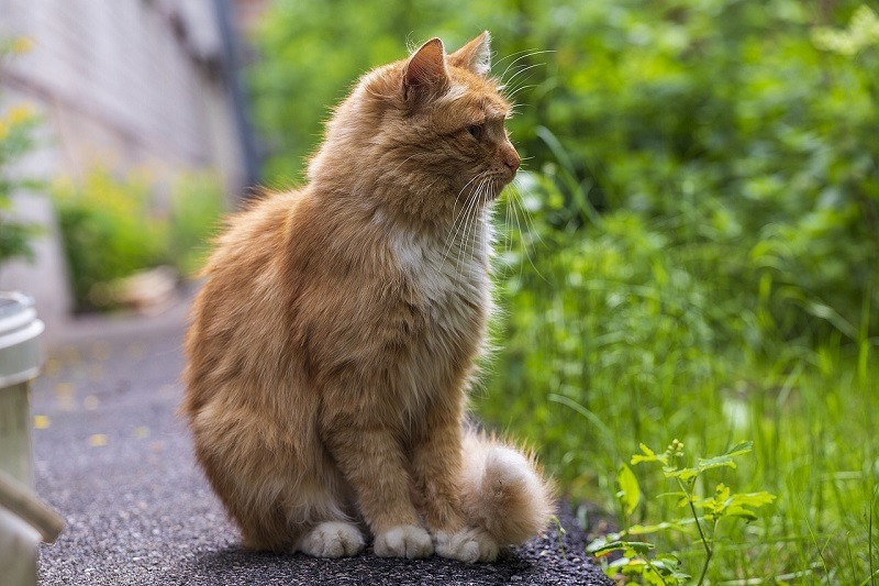 fluffy cat tail pixabay