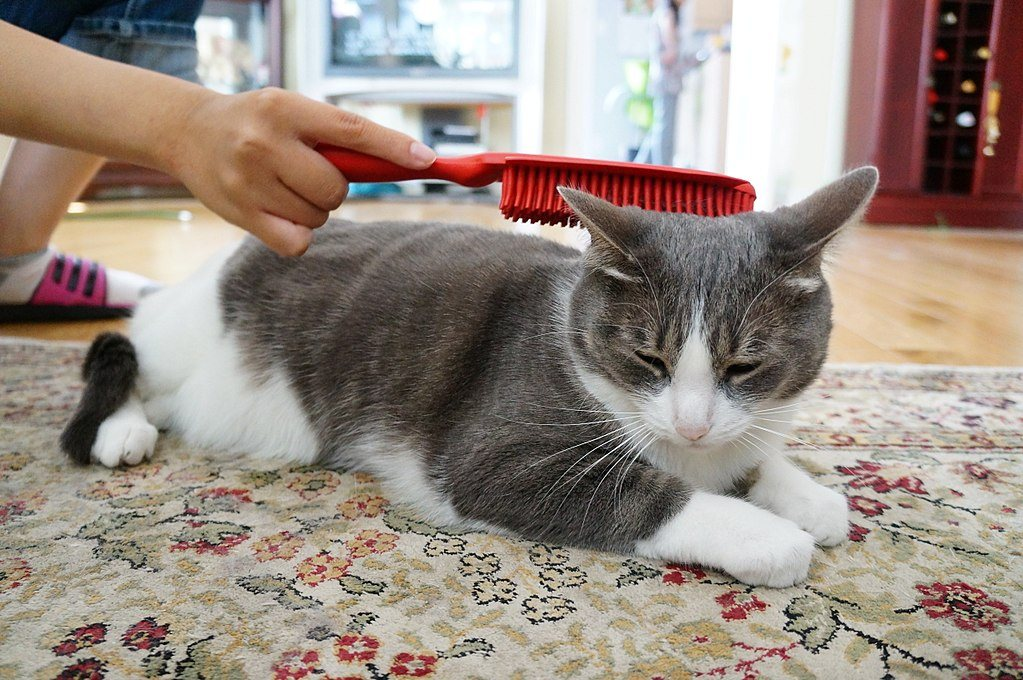 hand brushing a cat
