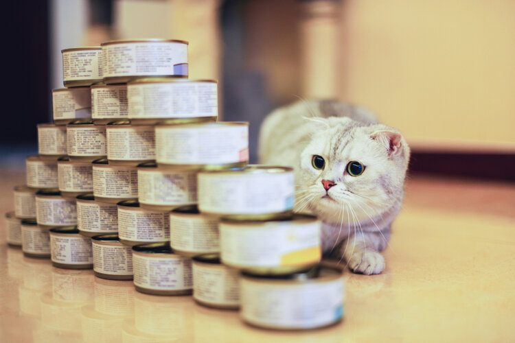 grey cat looking at tuna cans