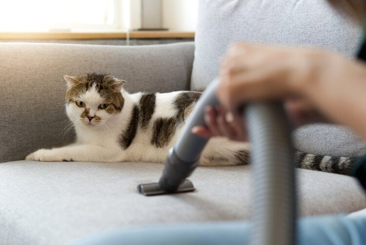 cat on couch while vacuum