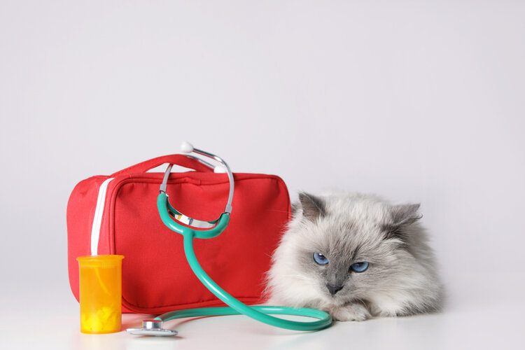 cat with medical supplies