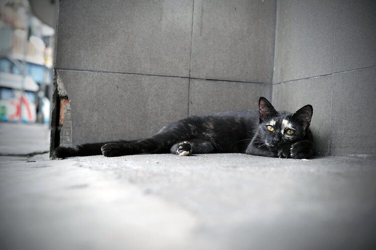 stray cat in corner