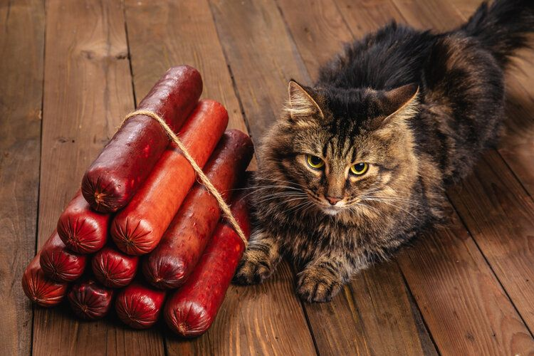 cat with sausages