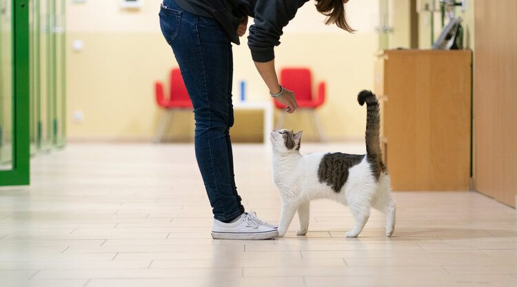 cat getting adopted