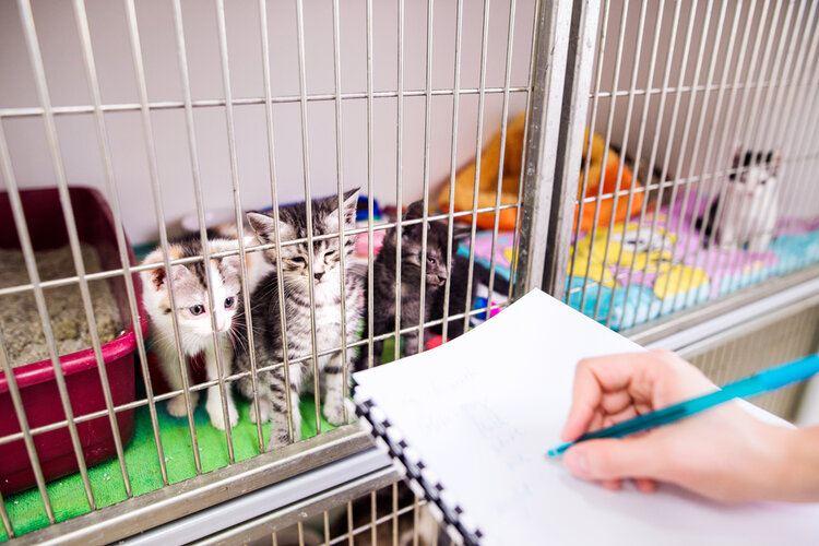 kitten in vet kennel