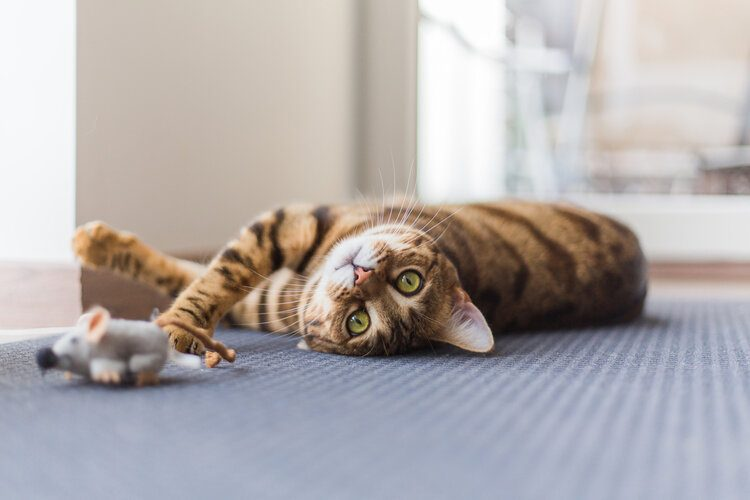 cat laying on ground playing
