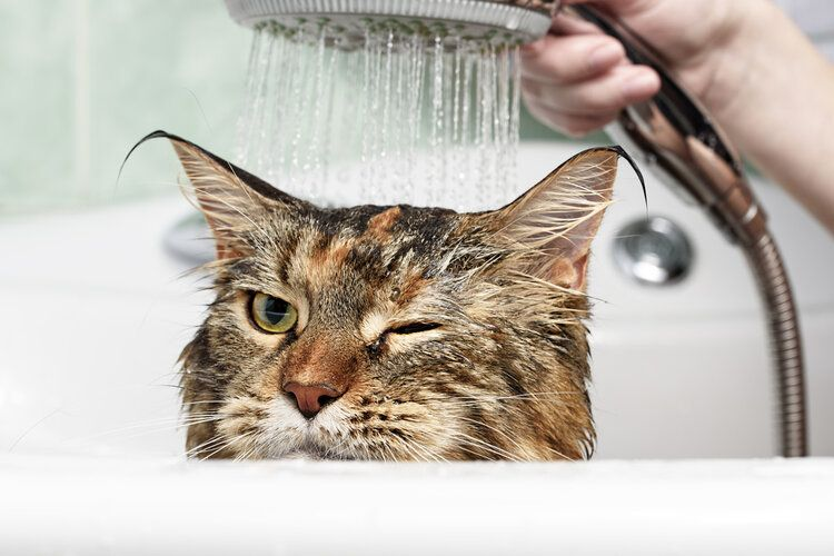 cat having a shower