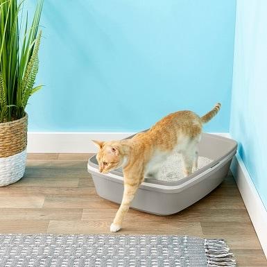 5Frisco Sifting Cat Litter Box