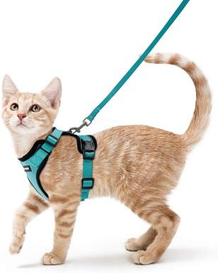 6rabbitgoo Cat Harness