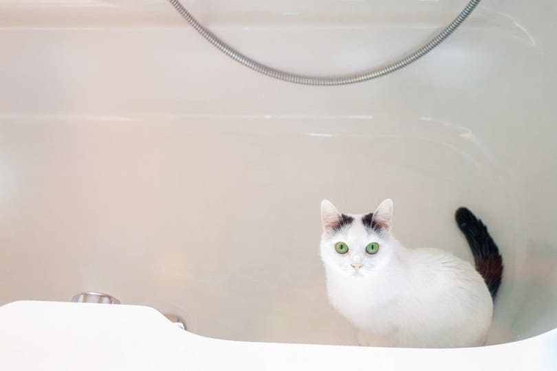 A white cat sits in an empty tub