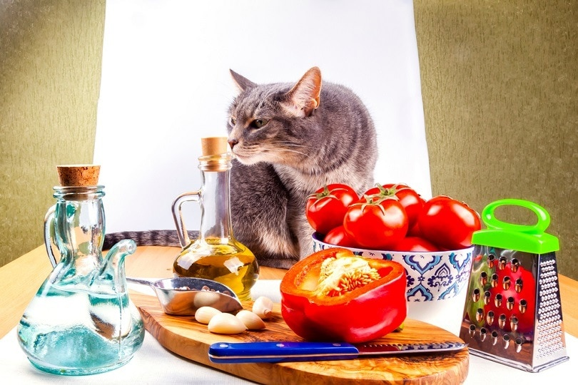 Beautiful grey cat and vegetables for cooking salad_bellena_shutterstock