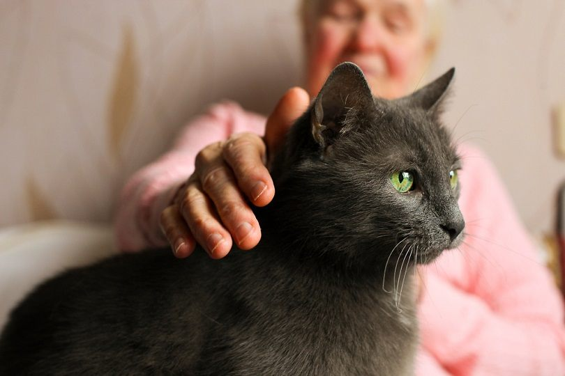 Big old cat sitting on elderly woman's lap_evrymmnt_shutterstock