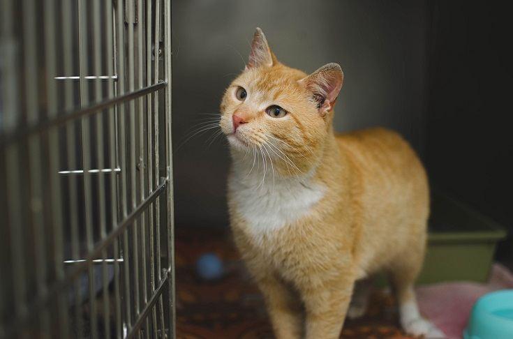 Cat afraid of cage