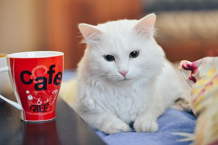 Cat and Tea