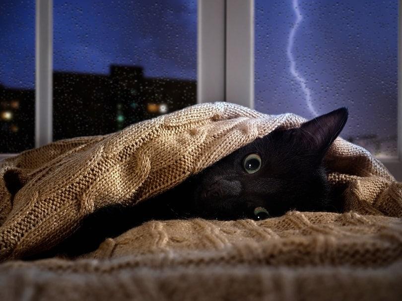 Cat hiding under the blanket