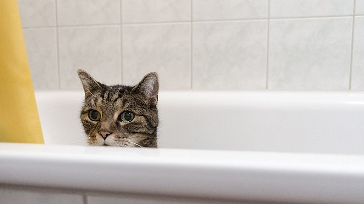 Cat inside tub