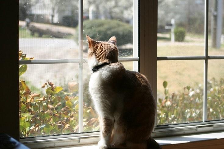Kucing mencari di luar ruangan