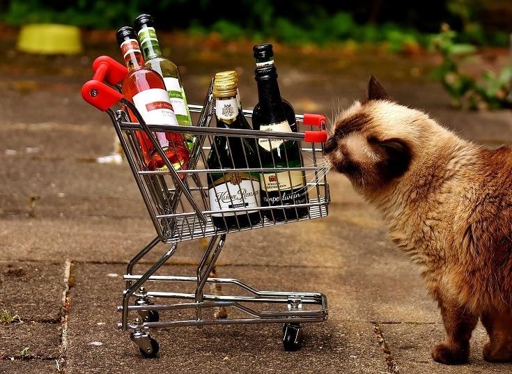 Cat shopping wine