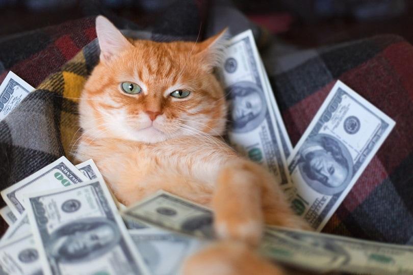 Cat with american dollars _Myramyra_shutterstock