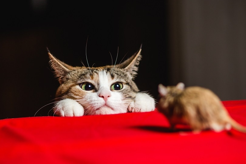 Cat with american dollars_sergey Zaykov_shutterstock