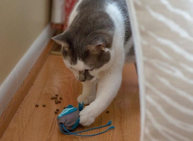 Doc & Phoebe's Cat Co. Indoor Hunting Cat Feeder Kit