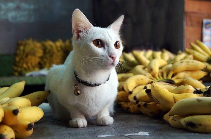 Guardian Cat of Market_sumedh gudur_shutterstock