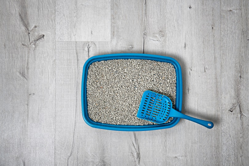 Litter tray and scoop for cat on floor