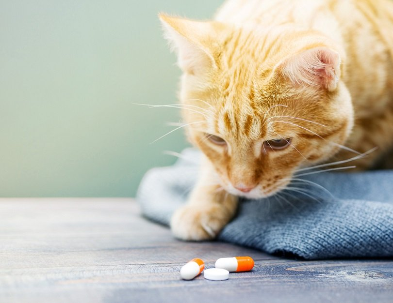 Red kitten and orange pills_saviskaya irryna_shutterstock