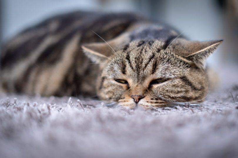 Sick cat medicines
