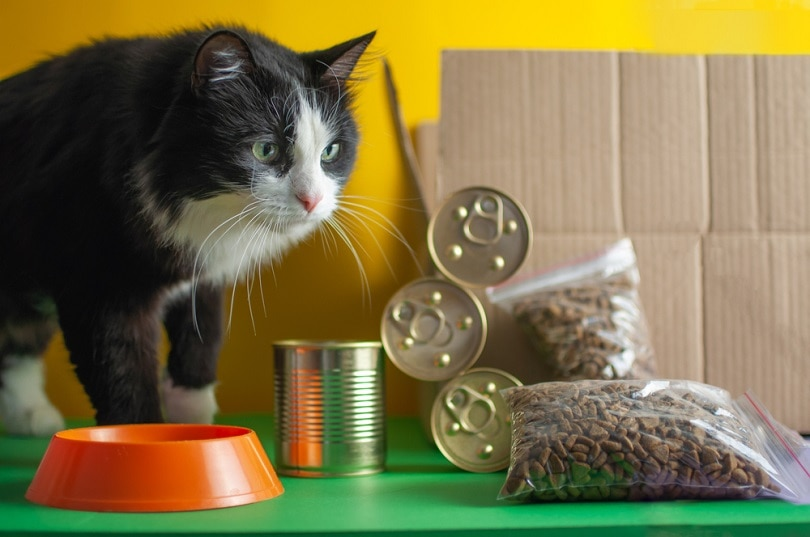 a cat with dry and canned cat food