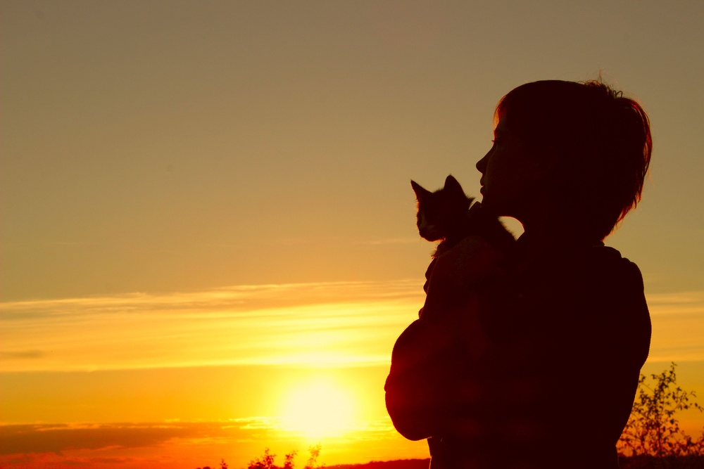 cat and boy in sunset