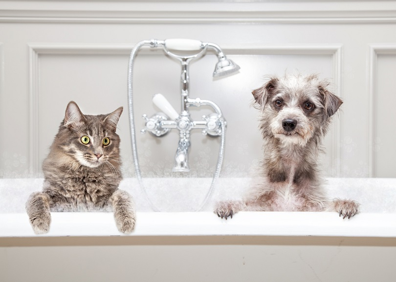 cat and dog sitting together in a luxury tub_Susan Schmitz_shutterstock (2)