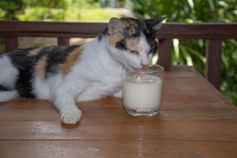 cat and glass of milk_thiskoon_shutterstock