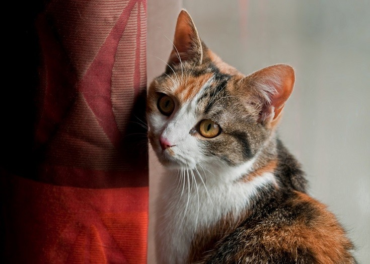cat drapes