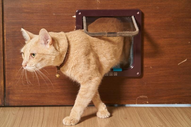 cat is walking through the cat flap door_Chamrasamee_shutterstock