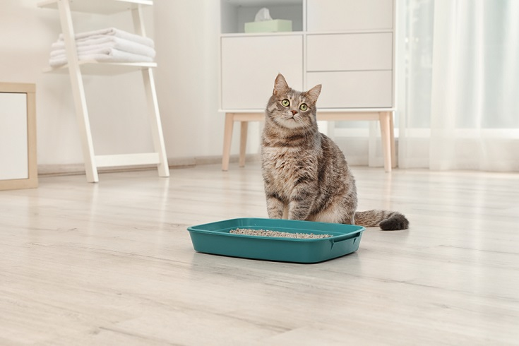 cat litter_Shutterstock_New Africa