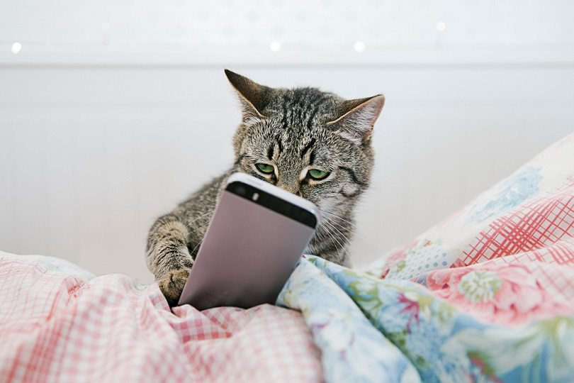 cat lying in bed and watching videos on the phone_Lario_shutterstock