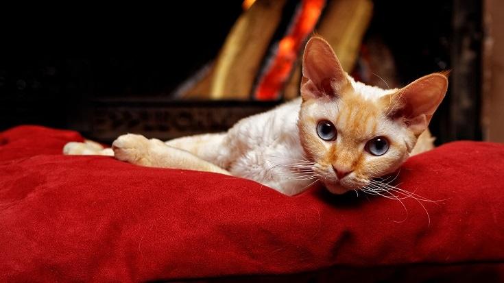 cat near a fireplace