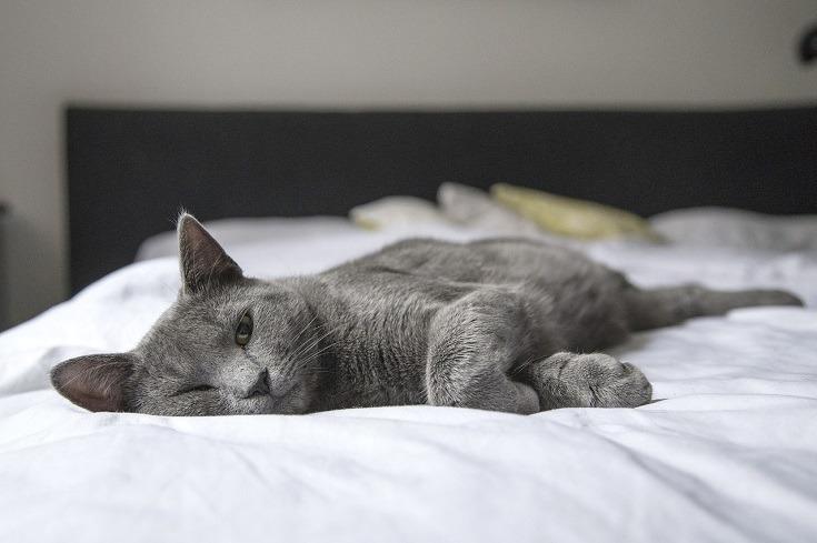kucing di tempat tidur