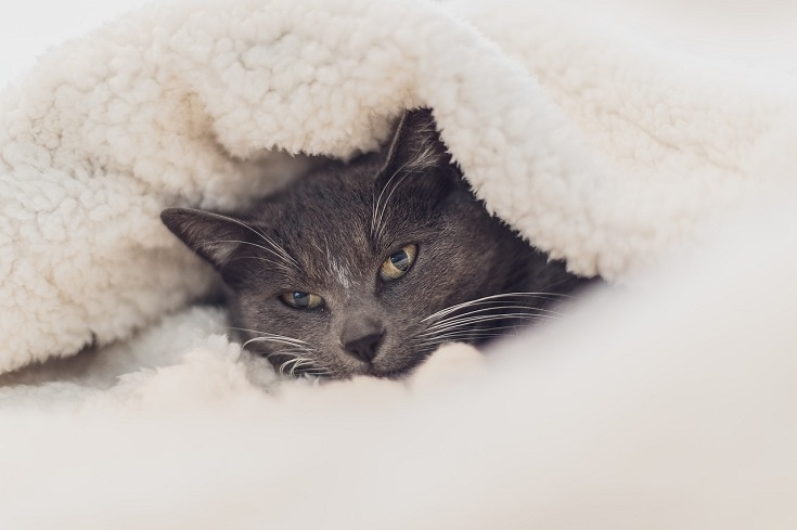 cat with wool blanket